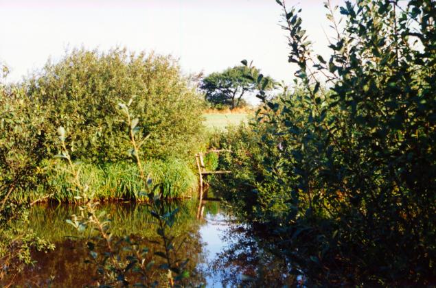 Hjortspring Mose er igen sprunget i busk.